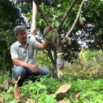 Cacaoteros de Ríos de Agua Viva siguen con rehabilitación de parcelas